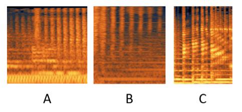 Figure 5 : Exemples de dynamismes des EMR. En A, dynamisme d'intensité dans « Tilapia » (Autechre, <em>Cichlisuite</em>, 1997). En B, dynamisme de hauteur avec un filtre passe-haut dans « Yeesland » (Autechre, <em>Cichlisuite</em>, 1997). En C, dynamisme de hauteur avec un effet dans « To Cure A Weakling Child » (Aphex Twin, <em>Richard D. James Album</em>, 1996).